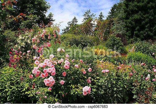 美丽, 花园 - csp6067683