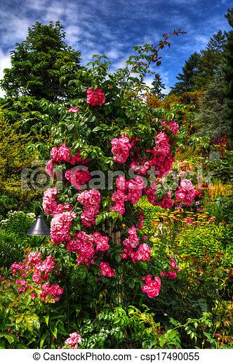 美丽, 花, hdr, 花园 - csp17490055