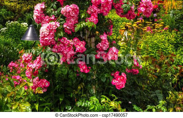 美丽, 花, hdr, 花园 - csp17490057