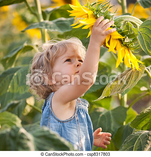 美麗, 向日葵, 孩子 - csp8317803