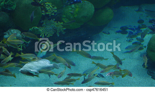 美麗, 外來, 水下, fish, 場景, aquarium., 看見 - csp47616451