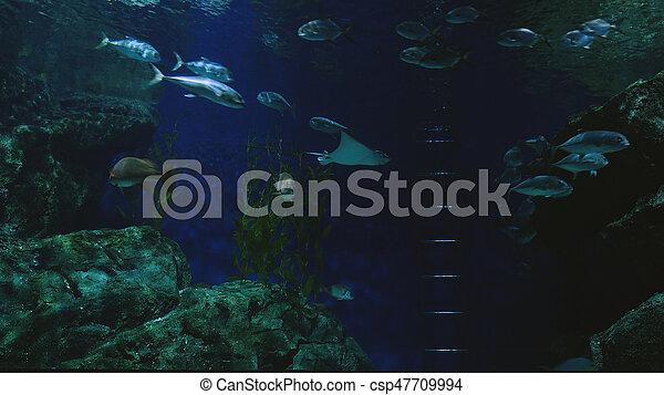 美麗, 外來, 水下, fish, 場景, aquarium., 看見 - csp47709994