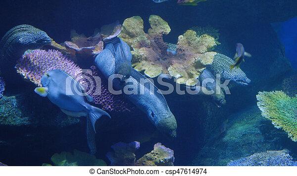 美麗, 外來, 水下, fish, 場景, aquarium., 看見 - csp47614974