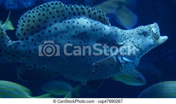 美麗, 外來, fish, aquarium., 看見, 嘴打開 - csp47690267