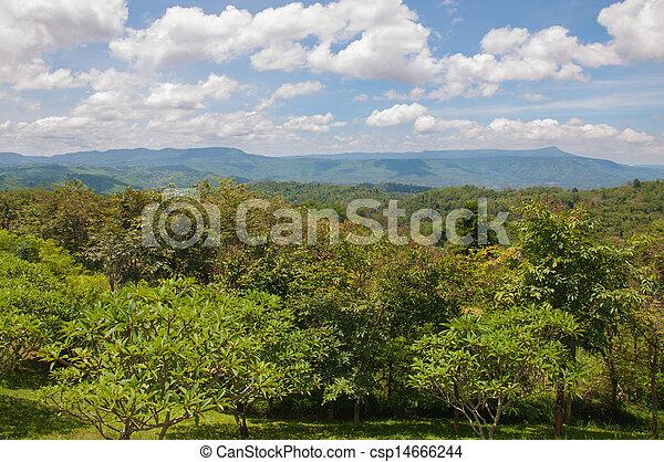 美麗, 山, 綠色的風景, 樹 - csp14666244