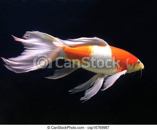 美麗, fish, 水族館 - csp16769987