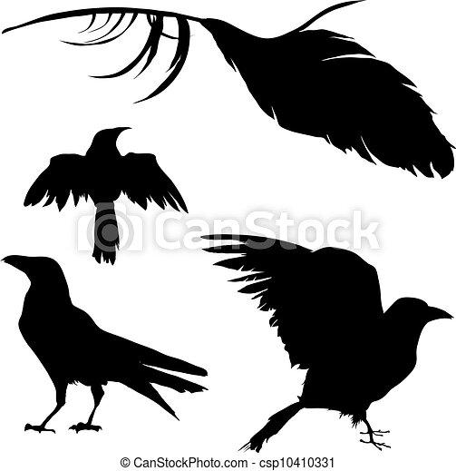 羽, ベクトル, ワタリガラス, からす - csp10410331