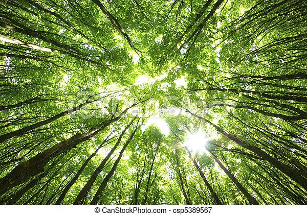 背景, 樹 - csp5389567