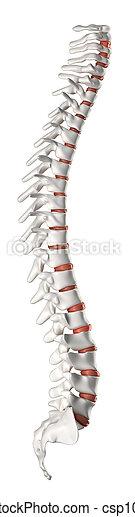 脊柱, 横の視野 - csp10166706