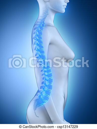 脊柱, 解剖学, 側面, 女性, 光景 - csp13147229