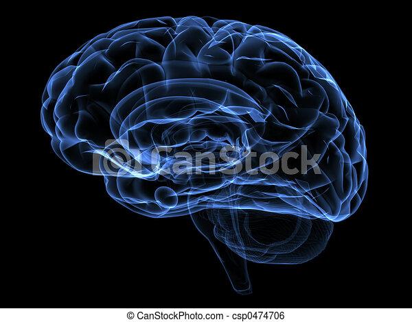 脳 - csp0474706