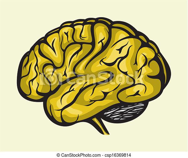 脳, 人間 - csp16369814