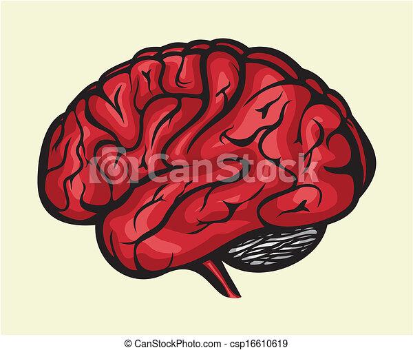 脳, 人間 - csp16610619