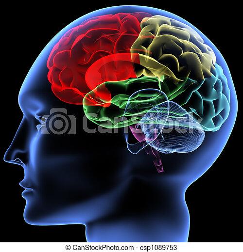 脳 - csp1089753