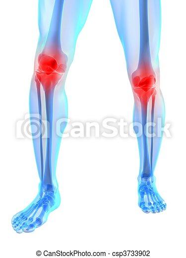 膝 苦痛 イラスト ひざ レンダリングした 骨格 イラスト 接合箇所