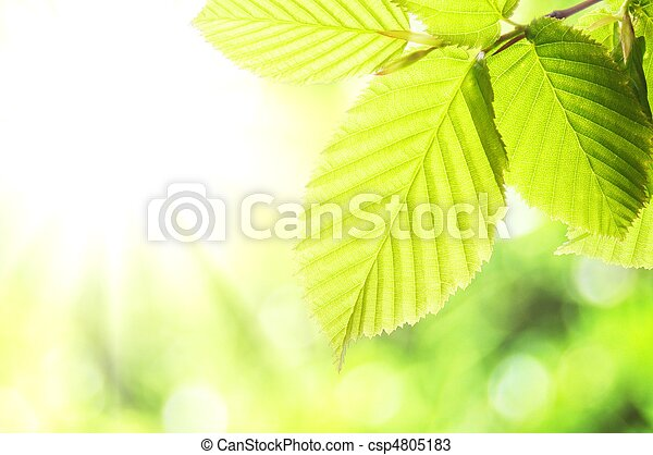 自然 - csp4805183