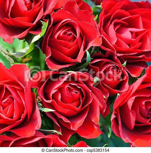 花束, ばら, 赤 - csp5383154