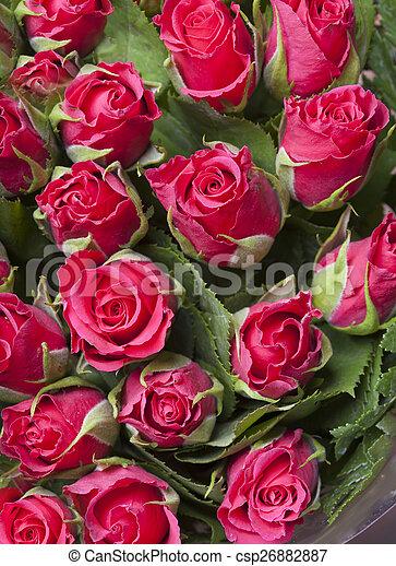 花束, ばら, 赤 - csp26882887