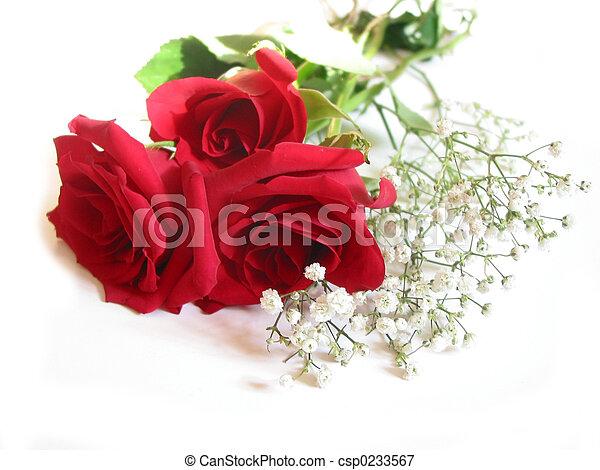 花束, バラ, 白 - csp0233567