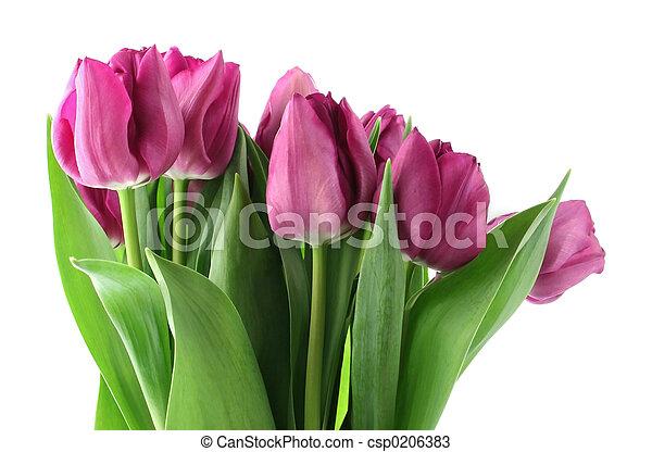 花束, 春 - csp0206383