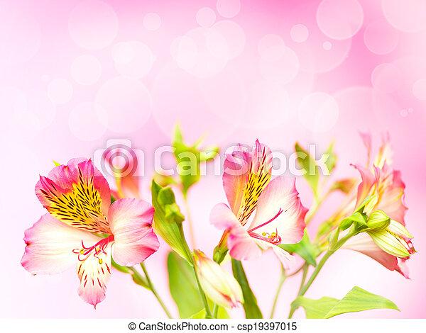 花束, 春, bokeh, 花, 背景 - csp19397015