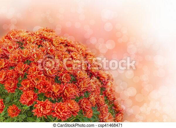 花束, 秋, 花 - csp41468471