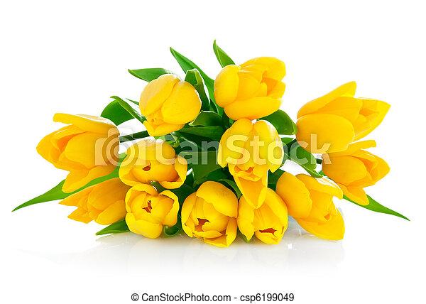 花束, 郁金香, 花, 黃色 - csp6199049