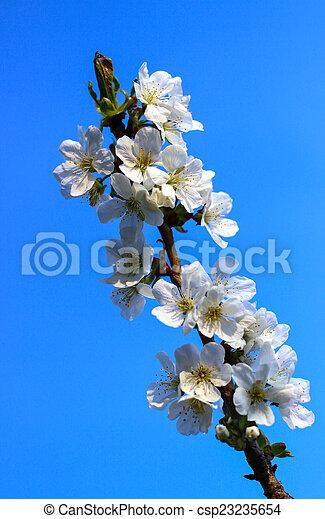 花, さくらんぼ - csp23235654