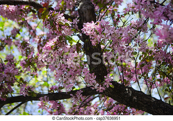花, さくらんぼ - csp37636951