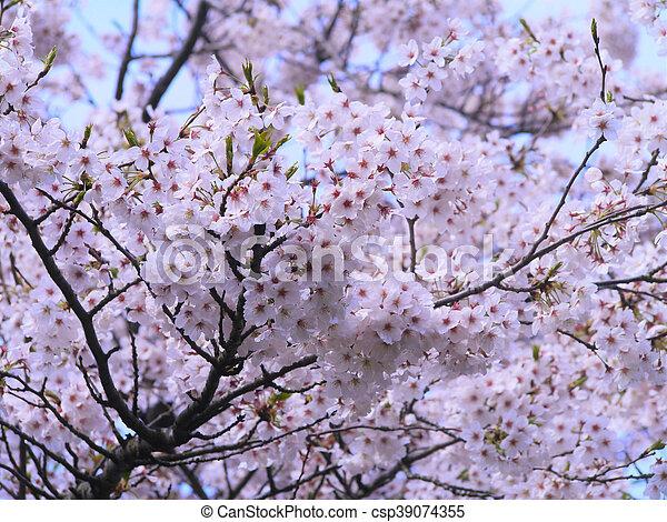 花, さくらんぼ - csp39074355