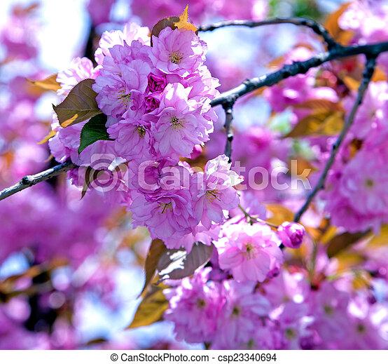 花, さくらんぼ - csp23340694