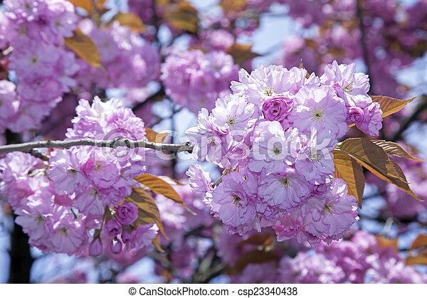 花, さくらんぼ - csp23340438