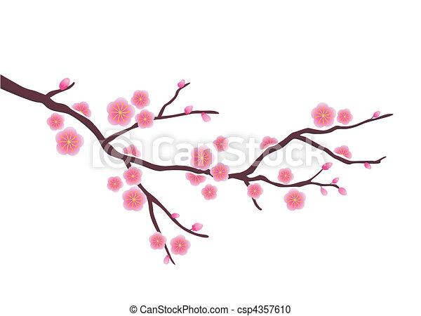 花, さくらんぼ - csp4357610
