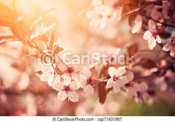 花, さくらんぼ - csp71931887