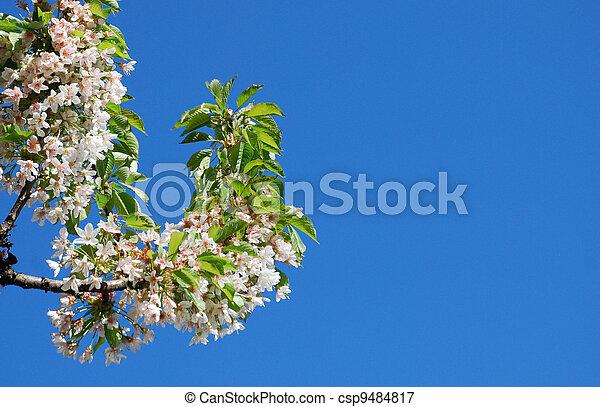 花, さくらんぼ - csp9484817