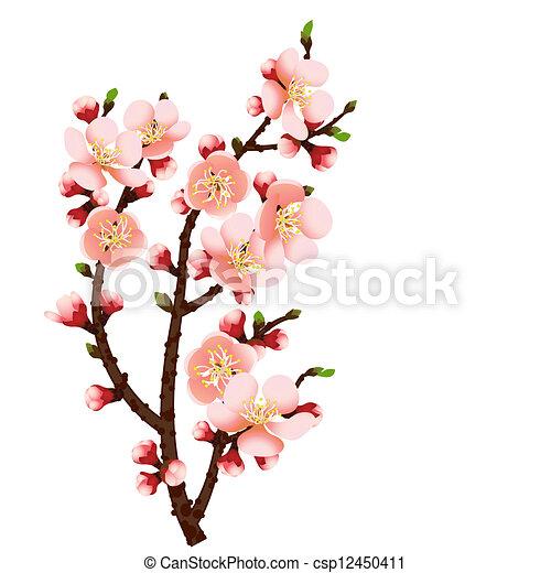 花, さくらんぼ, 抽象的, ブランチ, 背景 - csp12450411