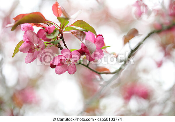 花, さくらんぼ, 抽象的 - csp58103774