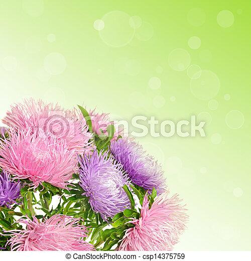 花, アスター - csp14375759