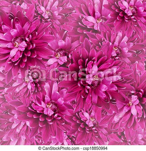 花, アスター - csp18850994