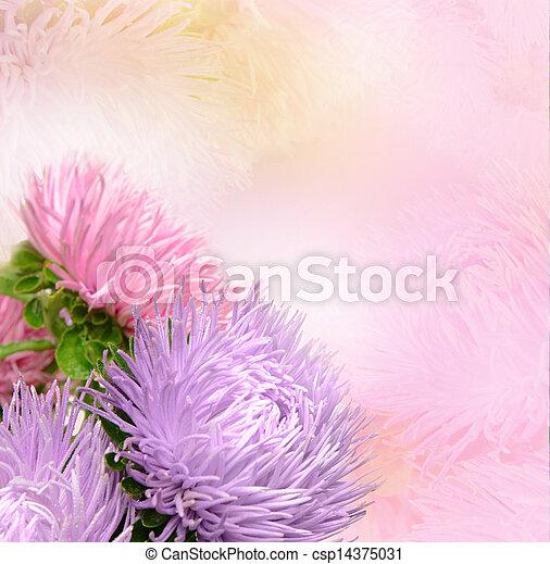 花, アスター - csp14375031