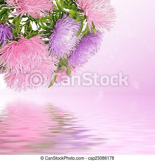 花, アスター - csp23086178