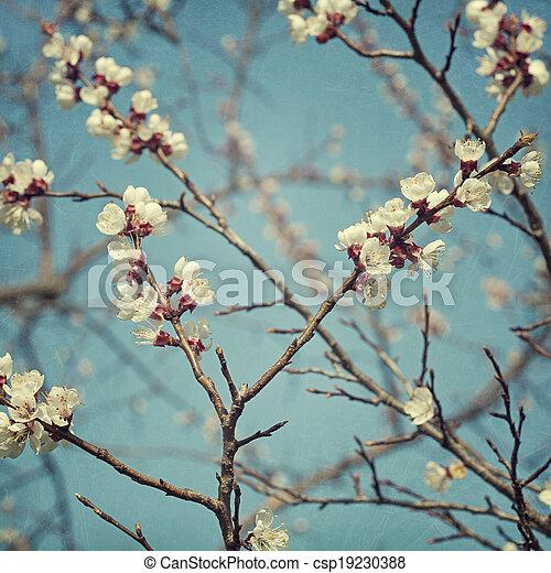 花, アプリコット, 花 - csp19230388