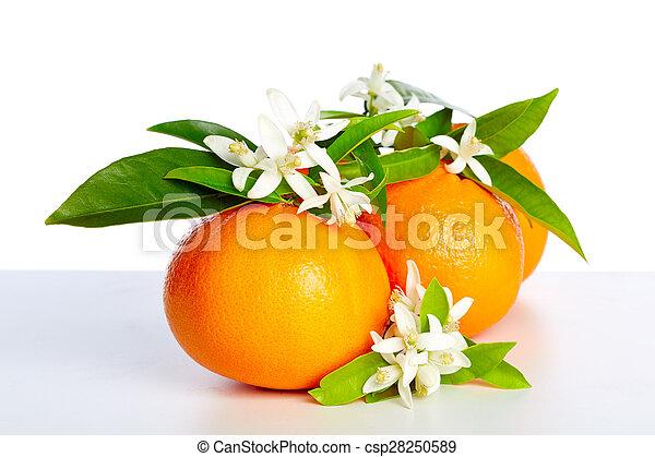 花, オレンジ, 白い花, オレンジ - csp28250589