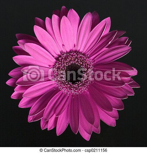 花 - csp0211156