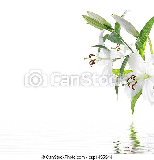 花, -, デザイン, 背景, エステ, 白, lilia - csp1455344
