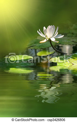花, ユリ - csp3426806