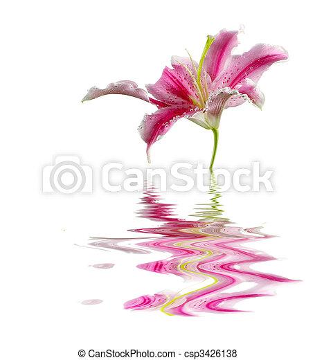 花, ユリ - csp3426138