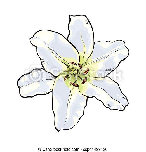 花 上 イラスト 手 単一 ベクトル 光景 引かれる 白いユリ ユリ