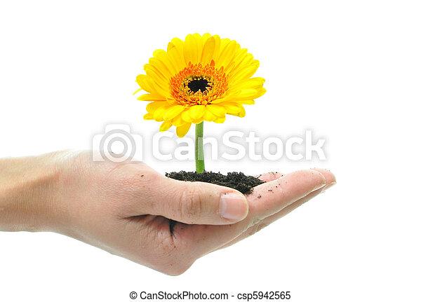 花, 手 - csp5942565