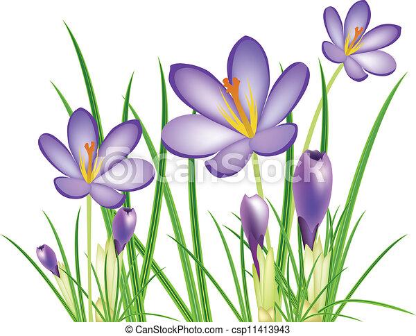 花, 春, ベクトル, illus, クロッカス - csp11413943